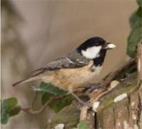 birdfeed